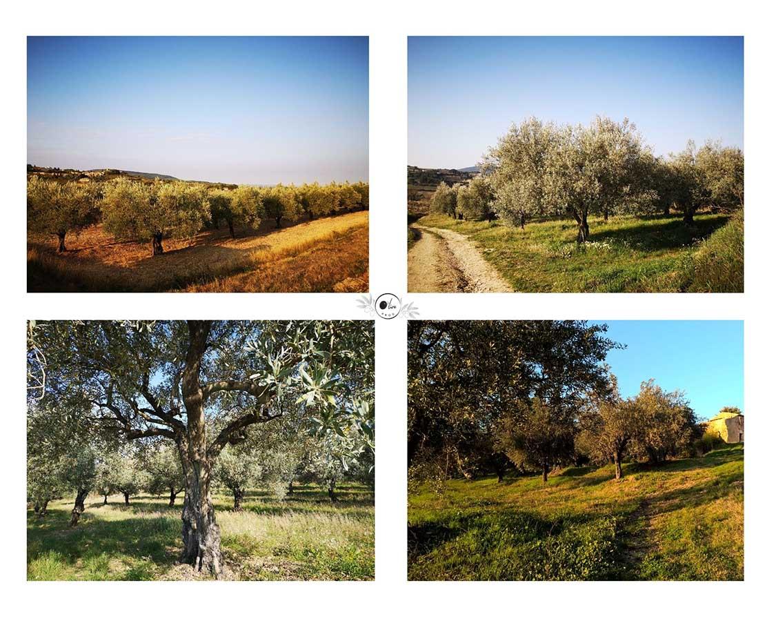 O' live PROD - moulinier producteur confiseur - vente en ligne huile d'olive, olives, olives en pâte, coffrets cadeaux - visitez le moulin